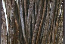 Vanilla Incense/Aromatics