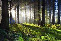 Environment - Energy - Design  / natural environment  and human-made environmental design factors and influences