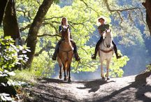 Countryside horse riding / There are many scenic equestrian routes, which leads across the Sudetes