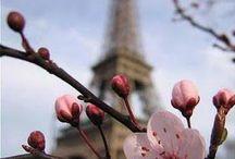 květy třešňové