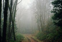Love Of Mists And Fogs / Mists and Fogs mark thresholds between this world and the Mystery... / by Myst Designs