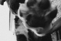 Psí Mazlíčci