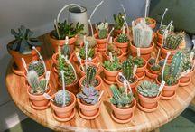 plantas jardin
