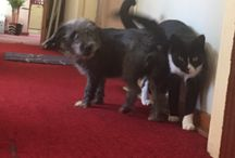 The youngsters / Bicho (the dog) and Chucho (the cat) play together