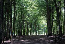 Foresta Umbra / Cuore Verde del #Gargano