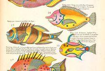 Peces y conchas