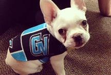 Laker Pets / by Grand Valley State University