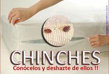 CONSEJOS PRACTICOS PARA CONOCER Y ELIMINAR LOS CHINCHES