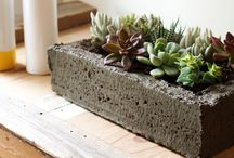 Garden Planters and Succulents