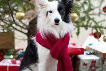 Christmas dogs / Ei kisuja ilman koiria :)