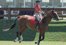 Jens horse