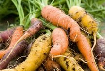 Fabulous Carrots / Heirloom, organic, delicious.  The best carrots for taste growing. Picked for smaller urban gardens and container growing.