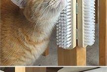 DIY project cat