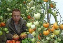 inspirace do zahrady
