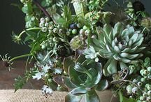 Plants - Succulents, Tilandsia (Air plants) / A variety  of plant arrangements with assorted succulents, tilandsia, etc
