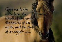 God's Majestic Creatures / Pictures of beautiful horses