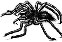 Bugs Insects Entomology arachnids arthropod myriapods butterflies spiders beetles and other bugs / Bugs Insects Entomology arachnids arthropod myriapods butterflies spiders beetles and other bugs worms snails science zoology
