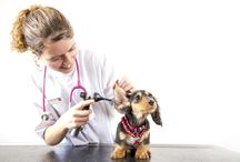 About Manor Vets / About Manor Vets We look after animals as if they were our own.