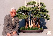 Bonsai & Naturaleza / Bonsai técnicas y ejemplares