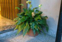 objetos / Está planta me recuerda a mi mamá y a la casa de mis papás