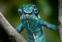 Reptiles / by Helena Scheibe