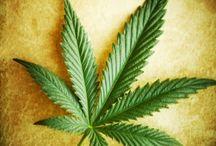 marijuana's medicinal benefits