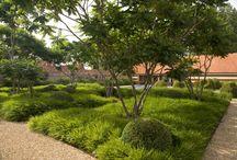 garden \\ planting \\ sedge lawn