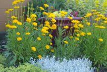 Tuinieren en zo