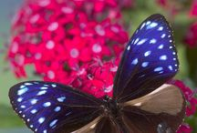 Butterfly...Dragonfly