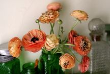 Flowers And Plants I love / by Lindsey Costa