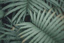 Plants/flower photography