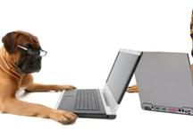 Pet Lover's Blogs