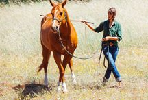 Horse understanding / A beautiful mind