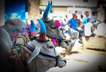 A Call to Non-Resident Indians (NRIs) to Help Feed The Sacred Cows. / Feed The Sacred Cows.