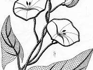 kwiaty kl