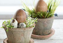 Spring Awakening / Seasonal inspiration for your home and garden!
