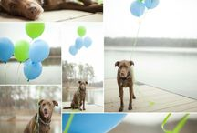 Dog birthday.