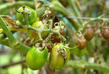 Tratamente legume si plante