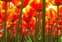 Flowers - Kukkia