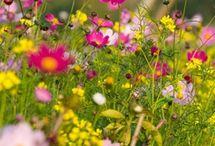 Homeschool Wildflower Nature Study