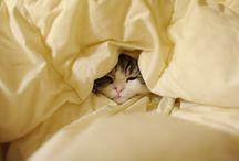 kitties / by Amelia Faiola