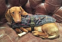Dogs / Coats, leads, collars