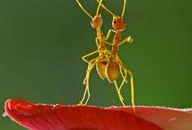 Formiche / formiche