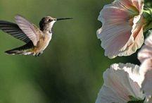 Attract hummingbirds!