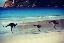 Australien  / Drømme ferie sted