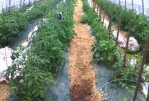 Farm Fresh Ohio Food / Where to find and how to preserve farm fresh Ohio food.