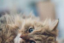 Cats / I love you cat!