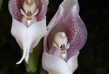storczyki/orchids