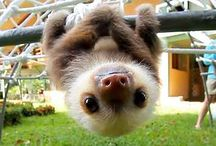 Baby Sloth <3
