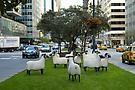 De Sheeps